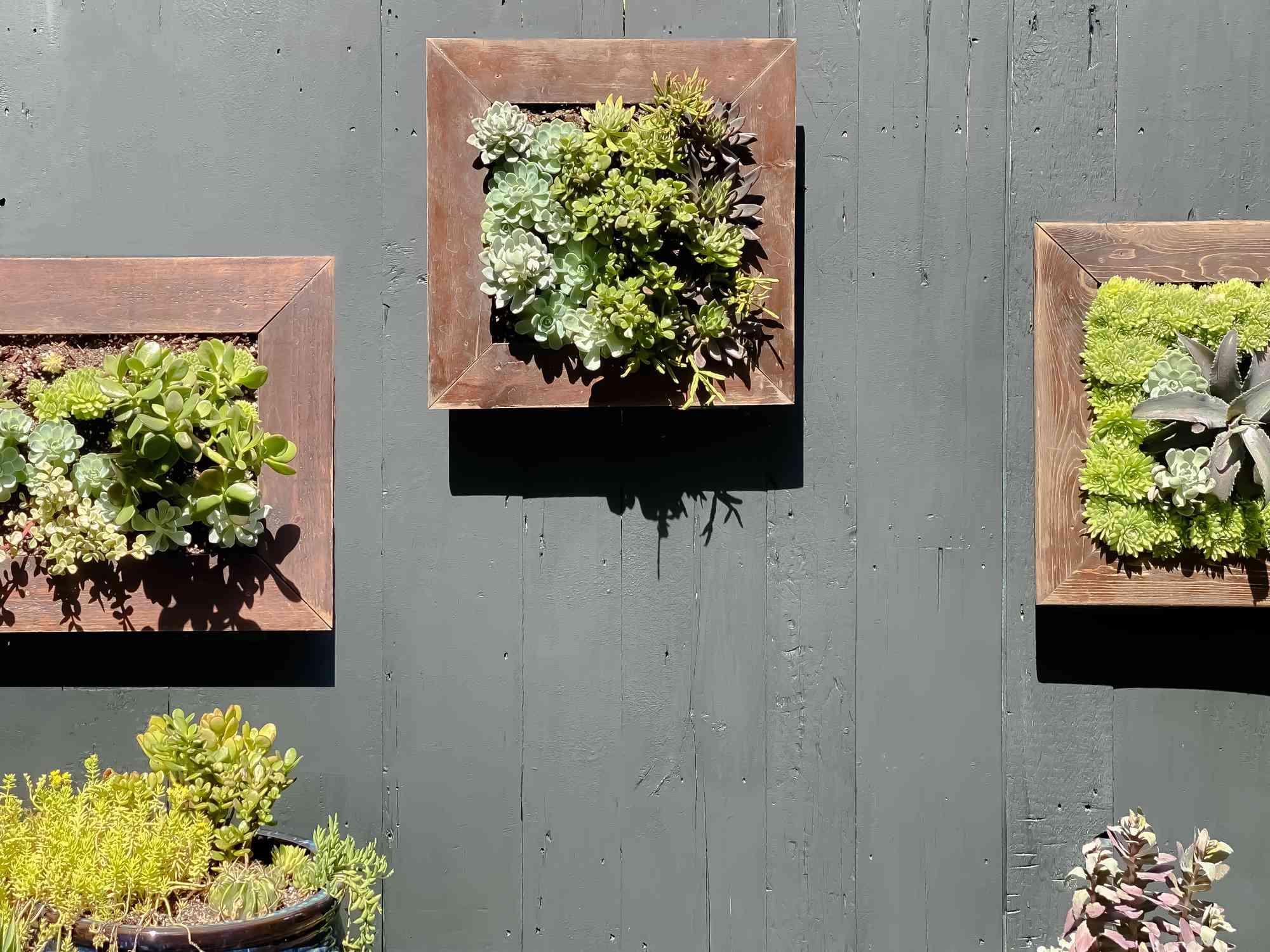 Outdoor vertical garden living wall art.