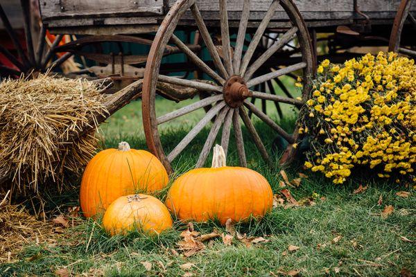Autumn scene with pumpkins, hay, and wagon wheel
