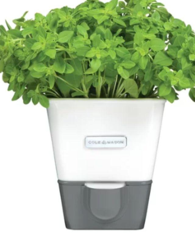 indoor plantar