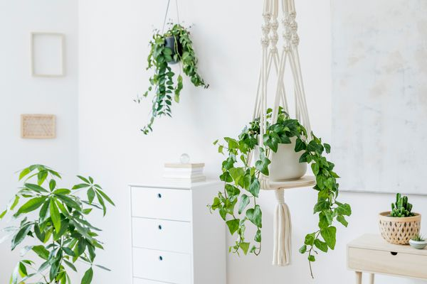 Hanging pothos in a white room styled with boho and macrame hangers.