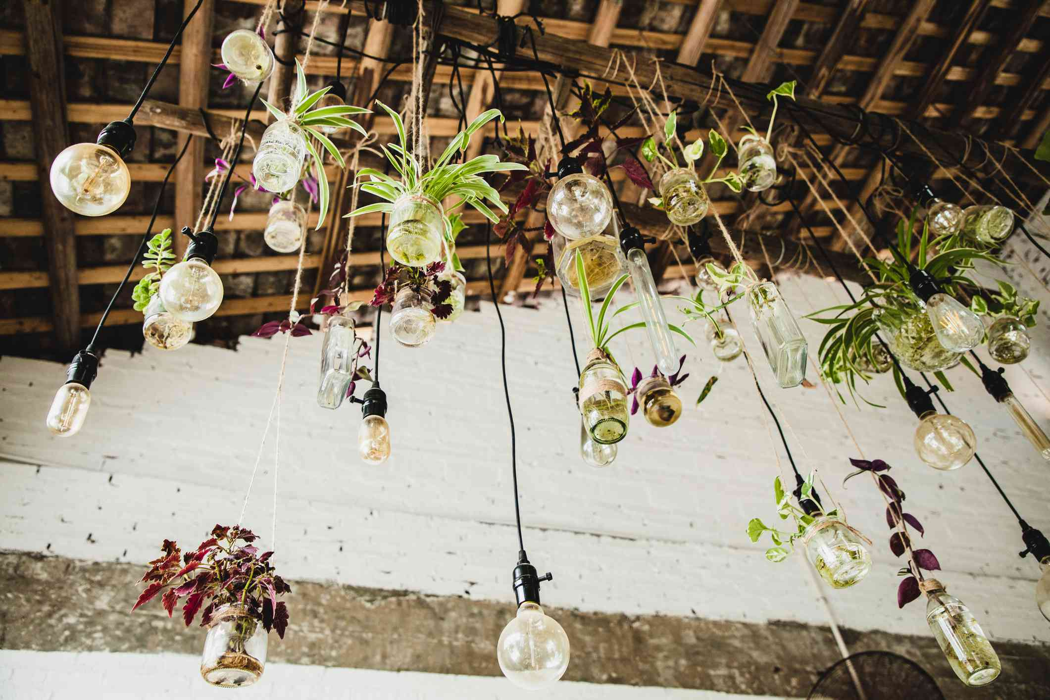 Shot from below - several glass containers hang with plants from a ceiling light.