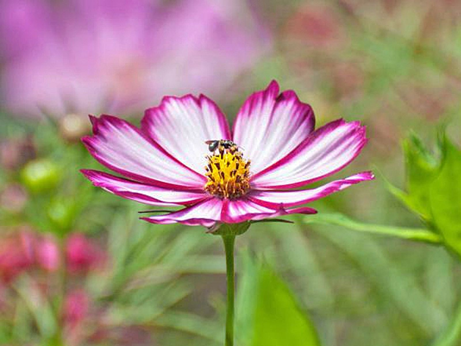 12 best annual flowers for full sun izmirmasajfo