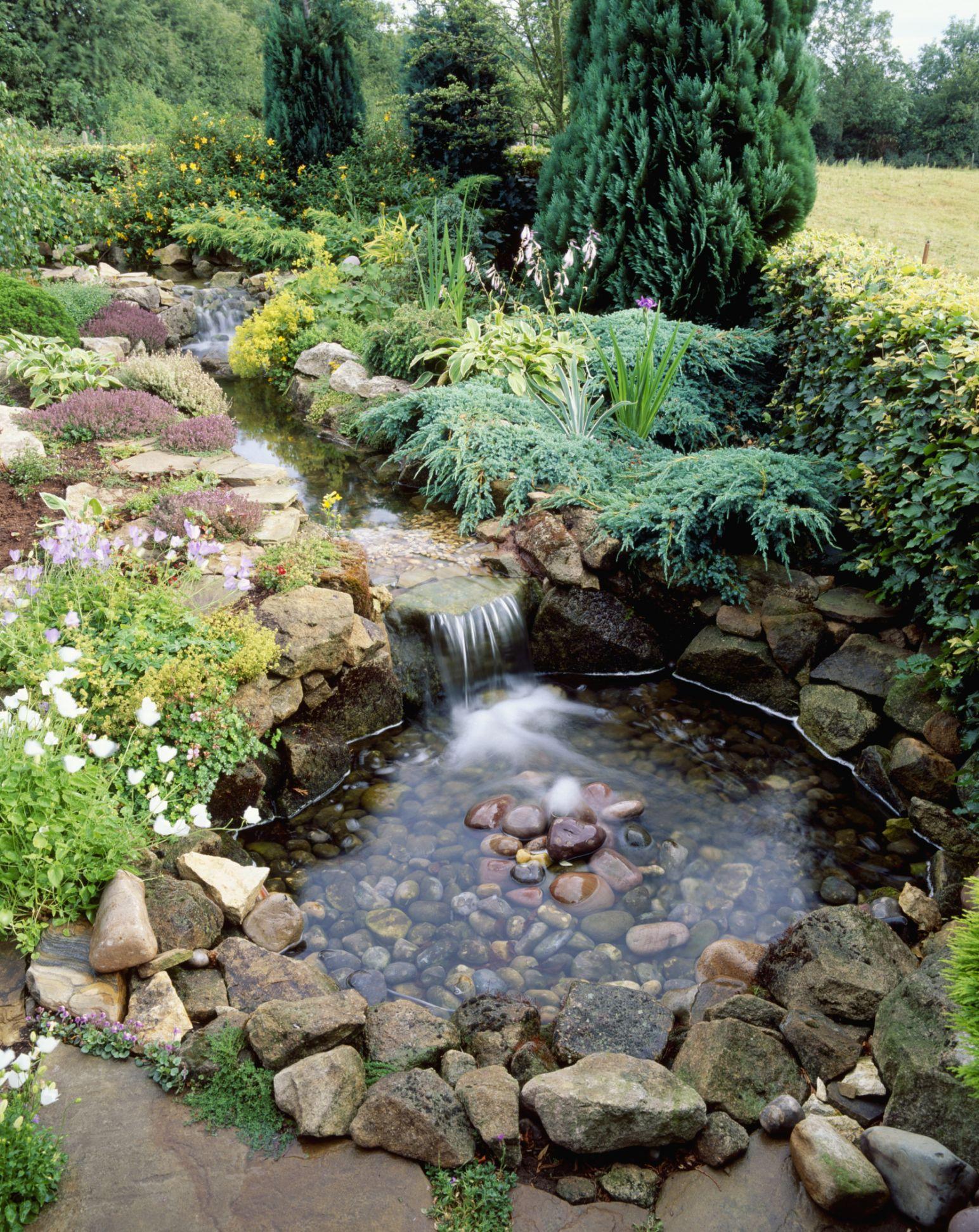 10 Best Garden Pond Building Practices