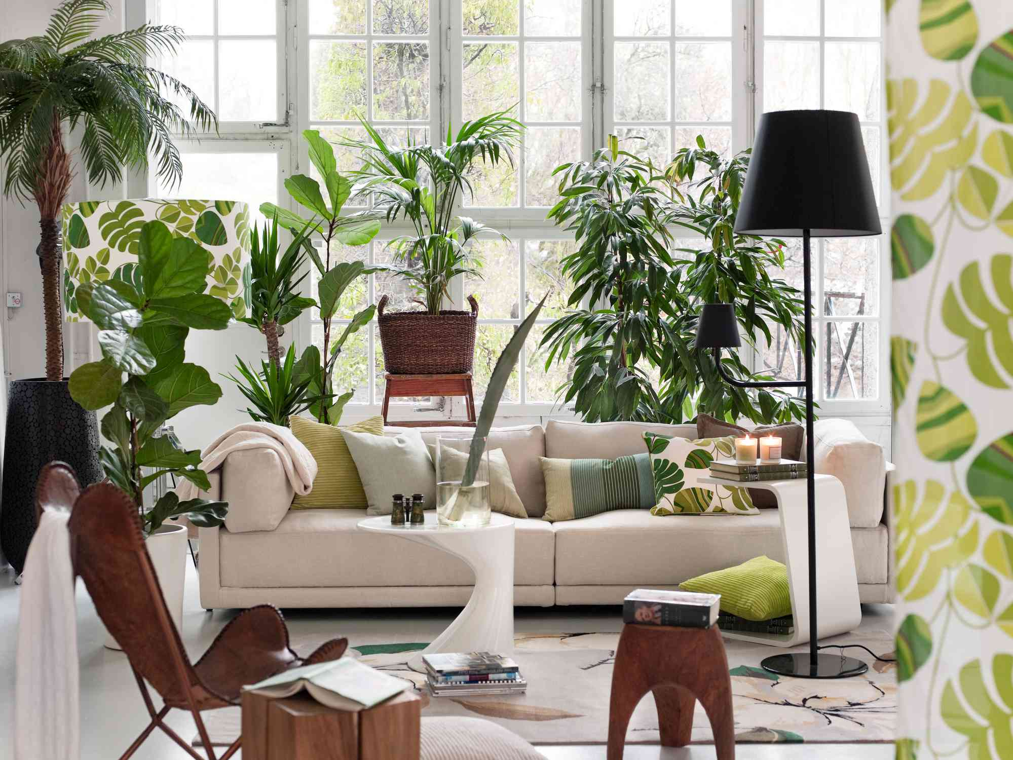 a plant filled room
