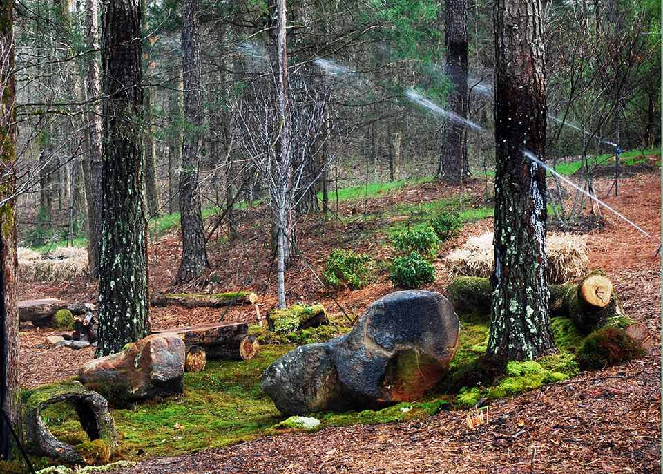 A misting system waters new moss on a forest hillside.