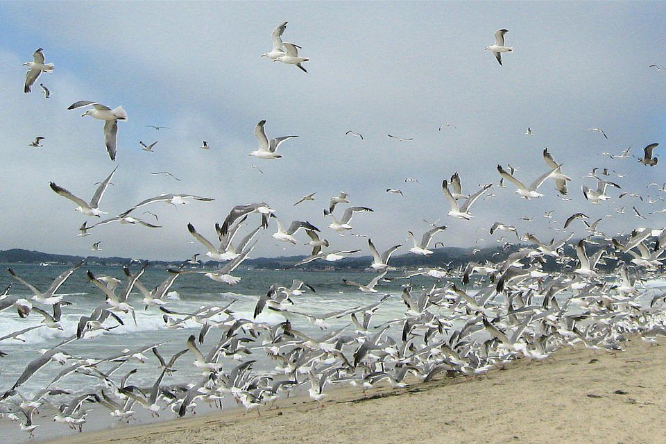 A flock of seagulls on a beach