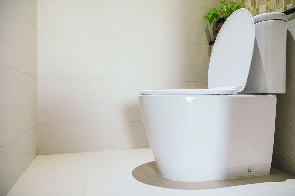 White bathroom toilet next to houseplant