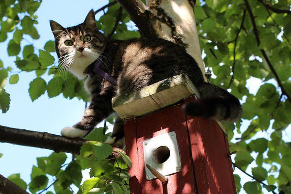Cat on a birdhouse