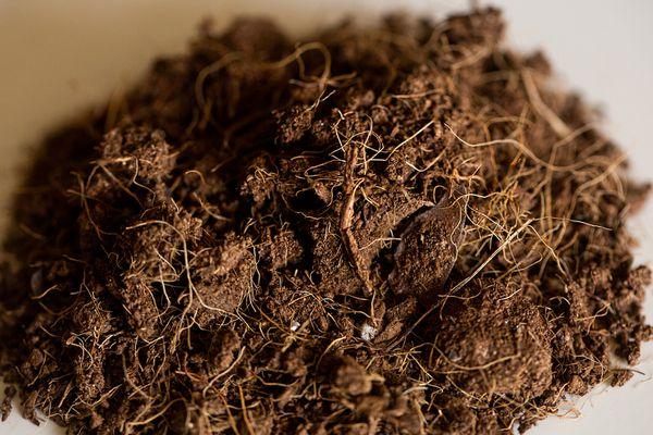 Pile of coir seed starter closeup
