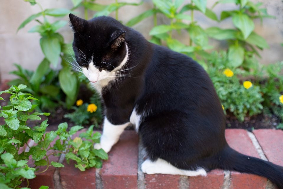 cat in front of a flowerbed
