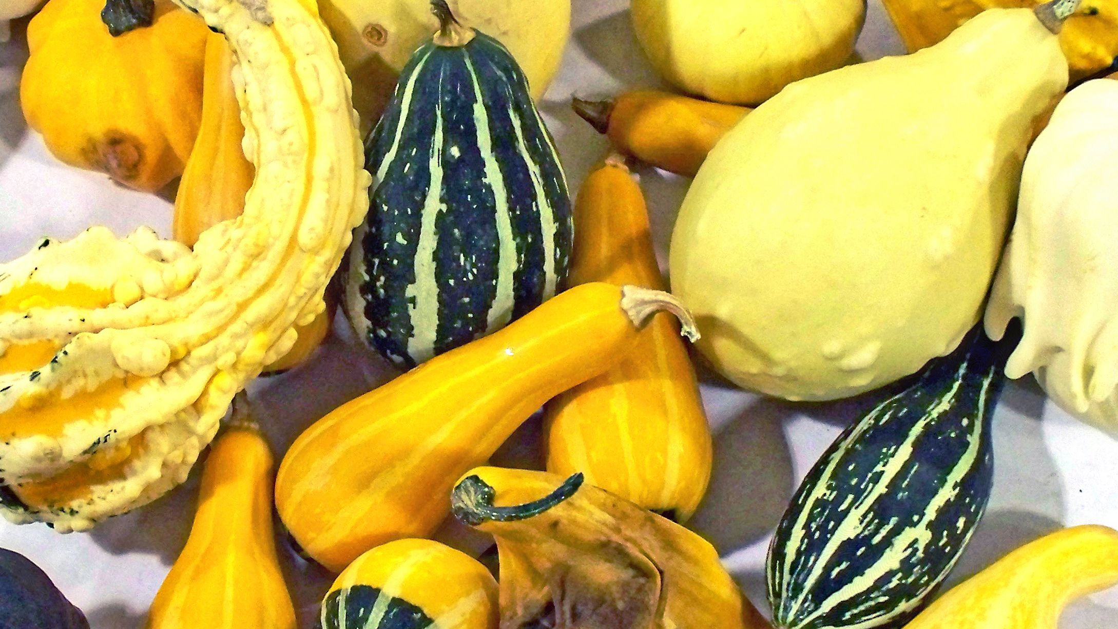 8 Best Types Of Squash For Beginners To To Grow
