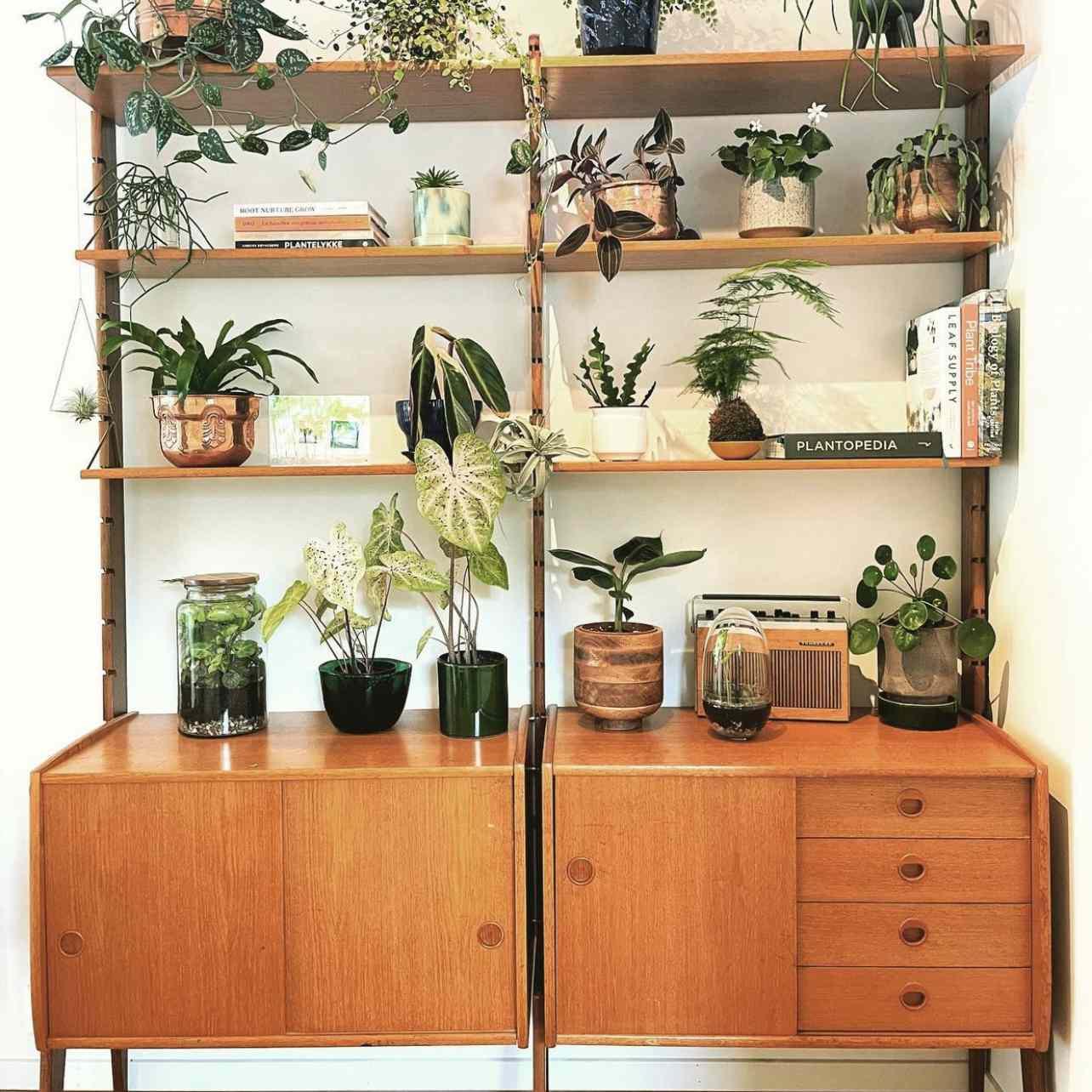 Benedikte Nashoug plant shelf