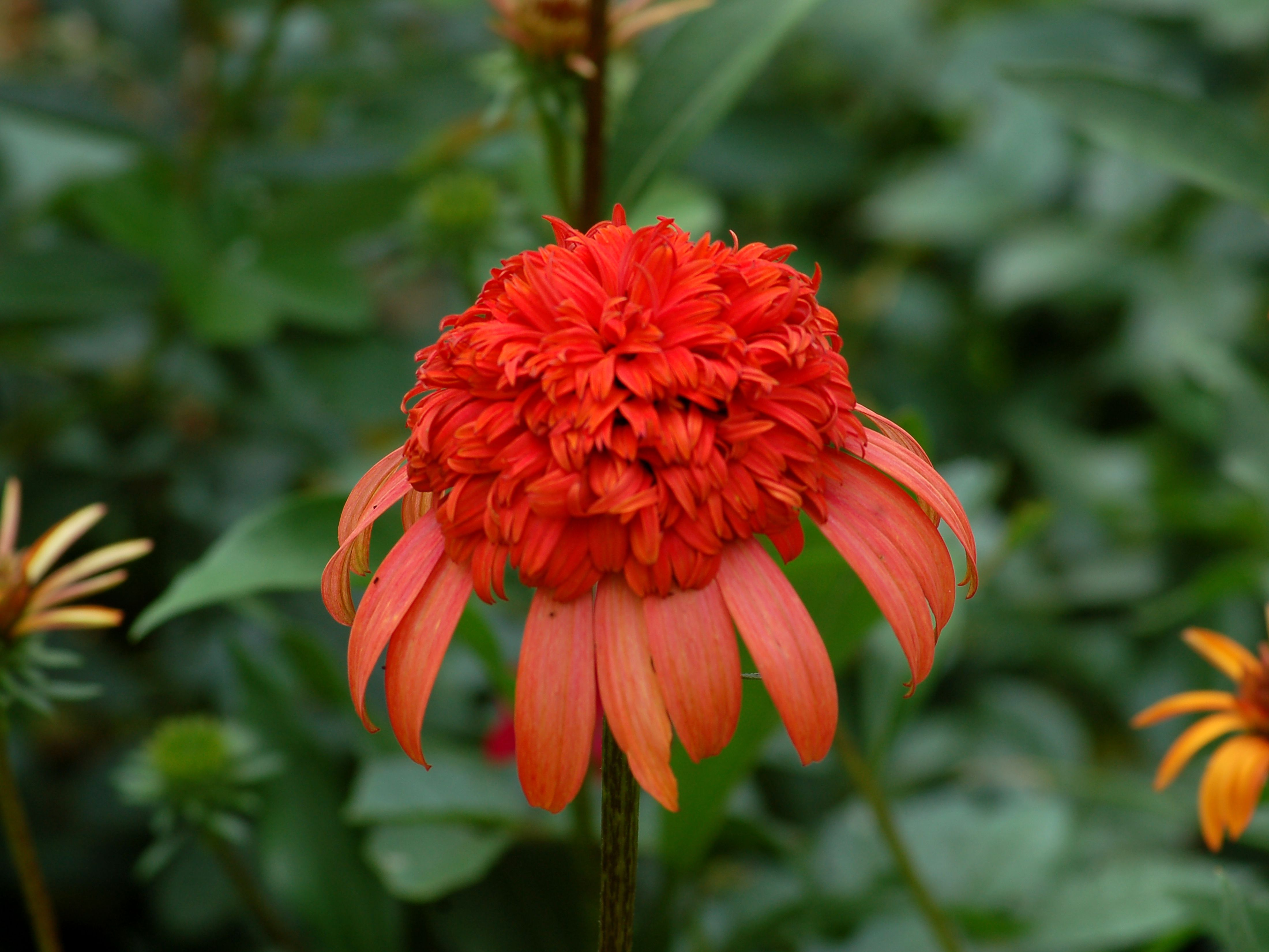 14 Most Unique Flowers To Grow In Your Garden