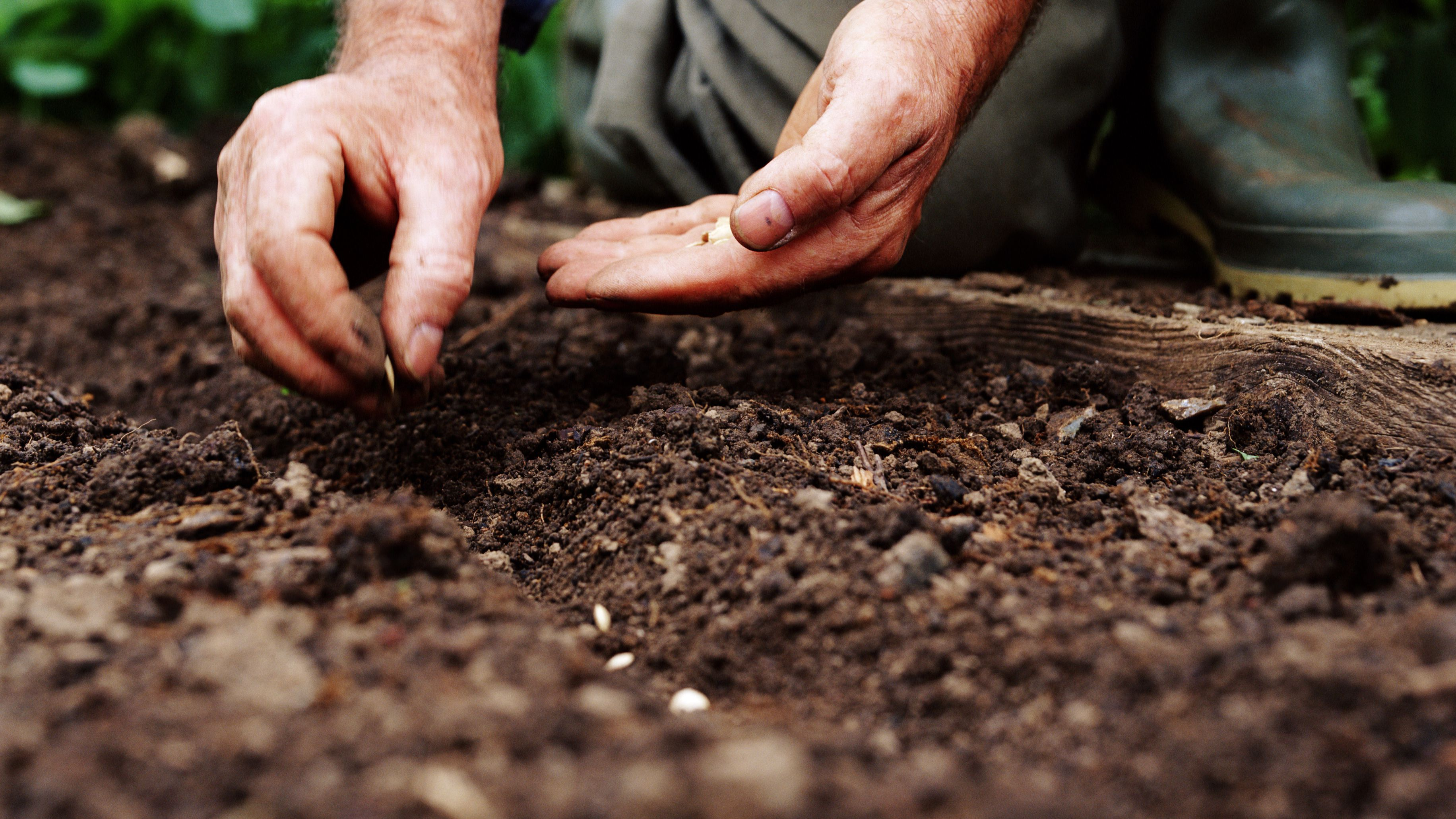 What Is Direct Seeding Or Direct Sowing