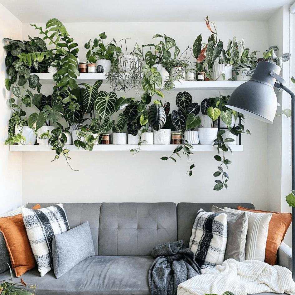 Dorrington Reid plant shelf