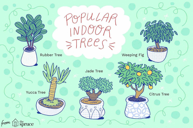 árboles de interior
