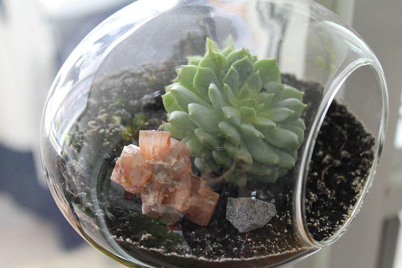 A close up shot of a hanging terrarium garden with a small suculent.