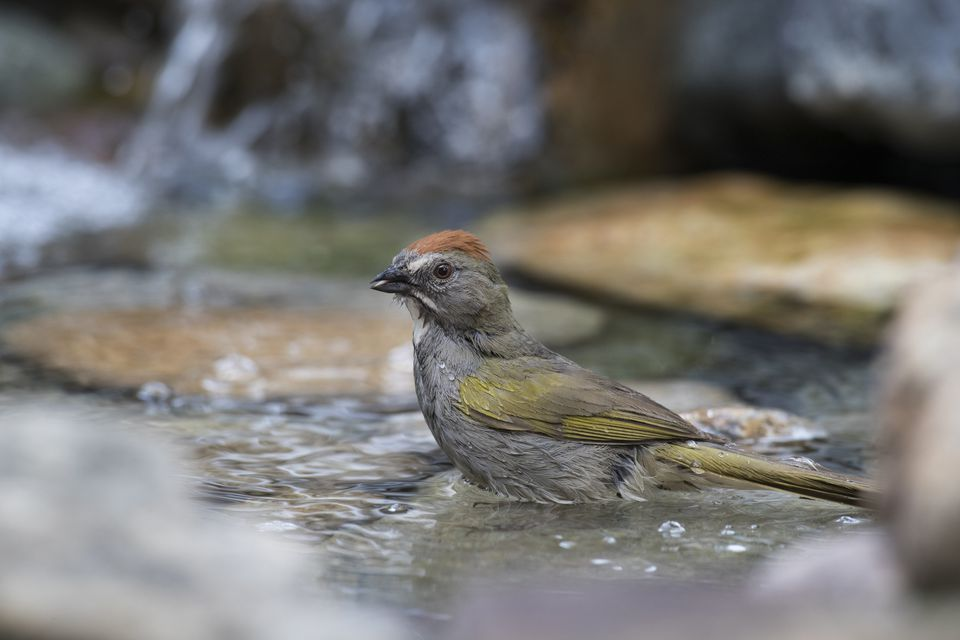Bird bathing