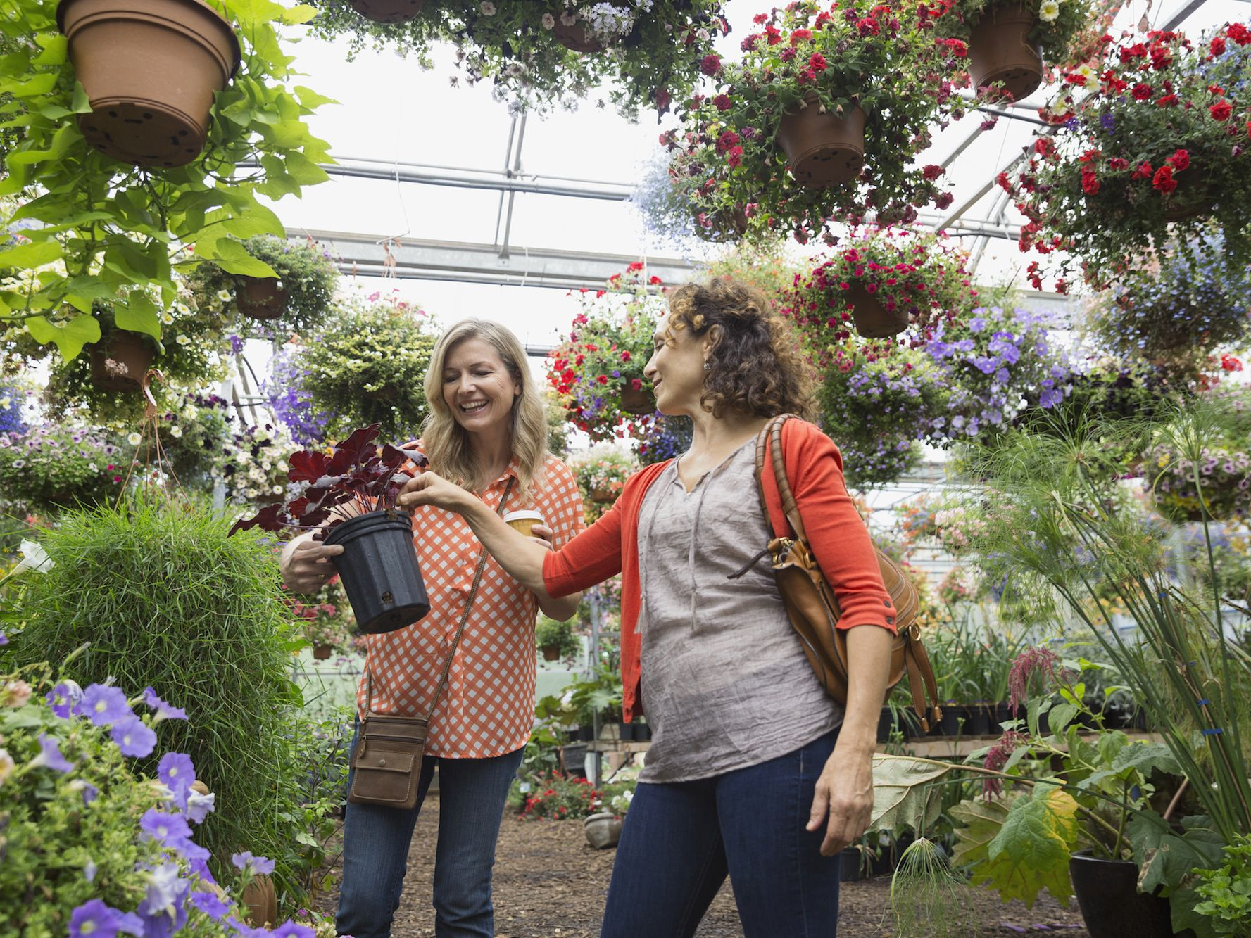 When Is The Best Time To Buy Plants For Your Garden