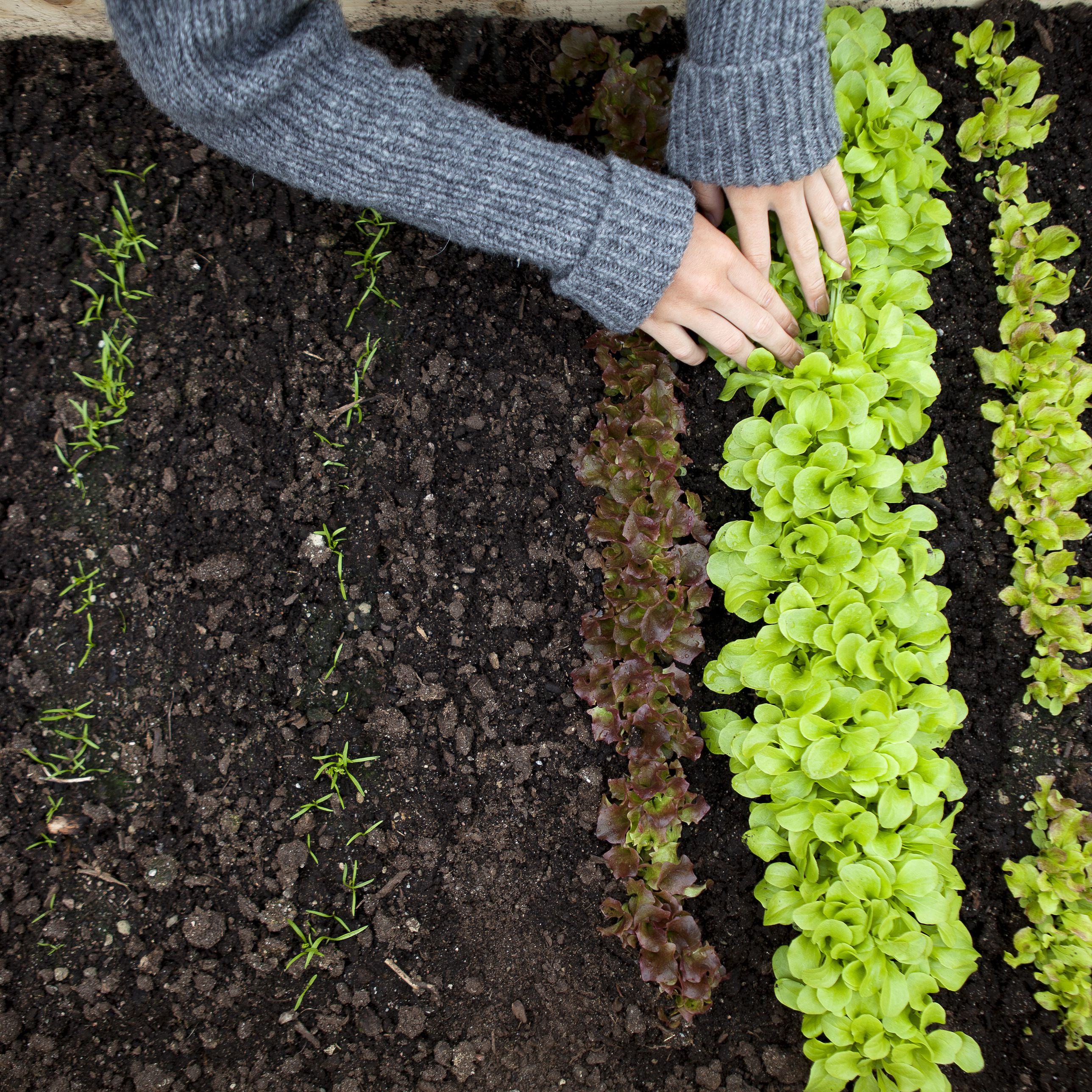 How To Thin Vegetable Seedlings