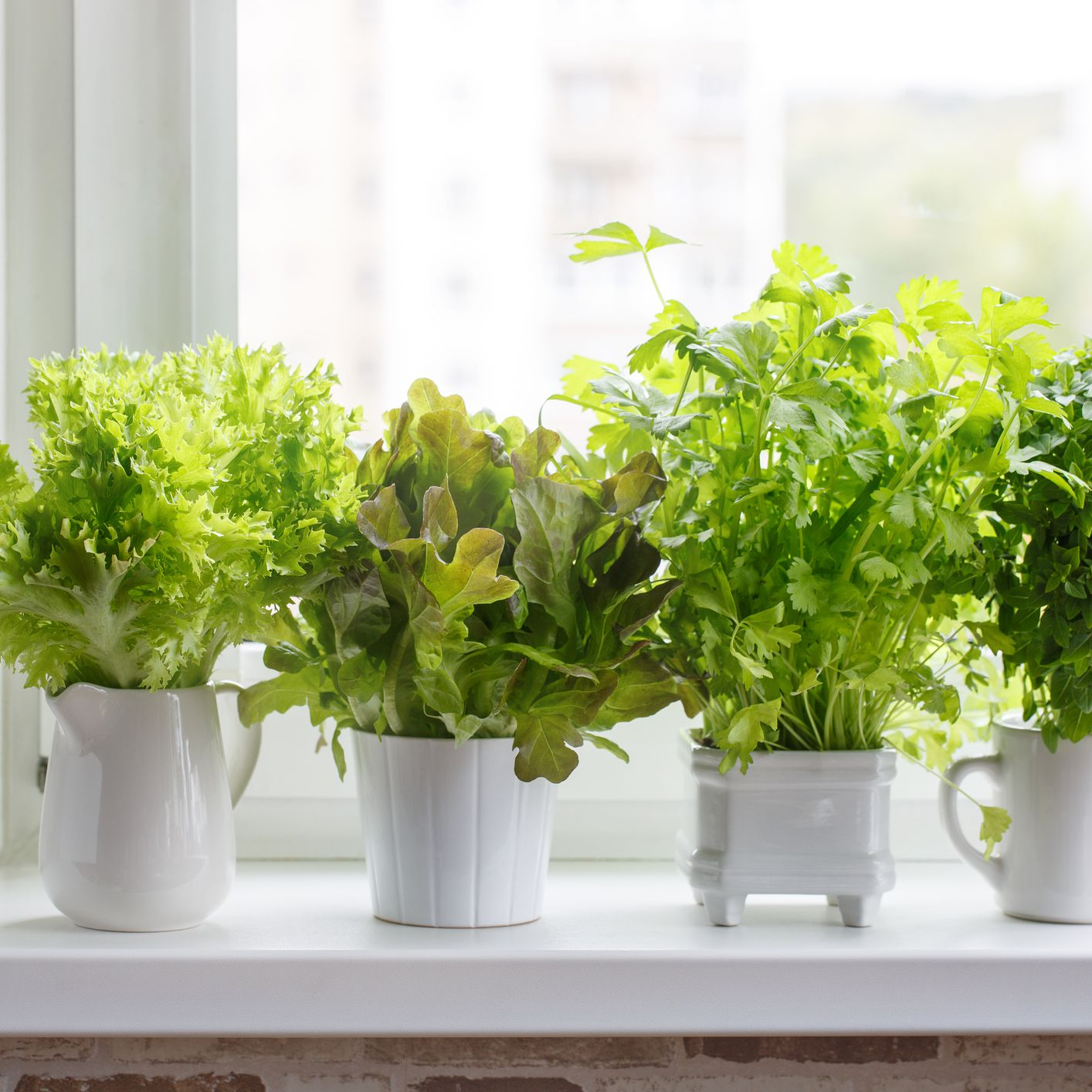 How to Grow Your Own Lettuce Indoors