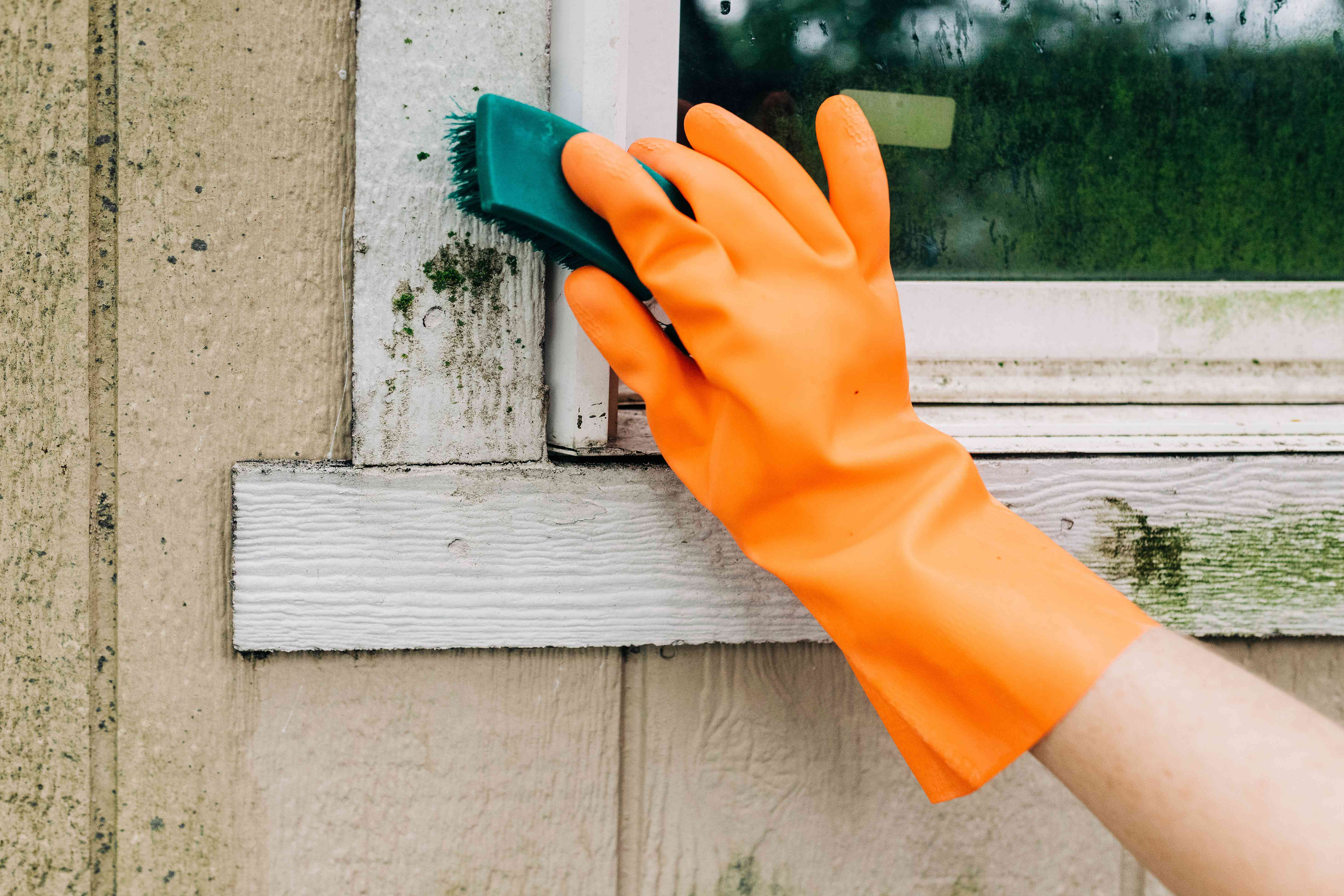 Green soft-bristled brush scrubbing mold off with liquid detergent and water solution with orange gloves
