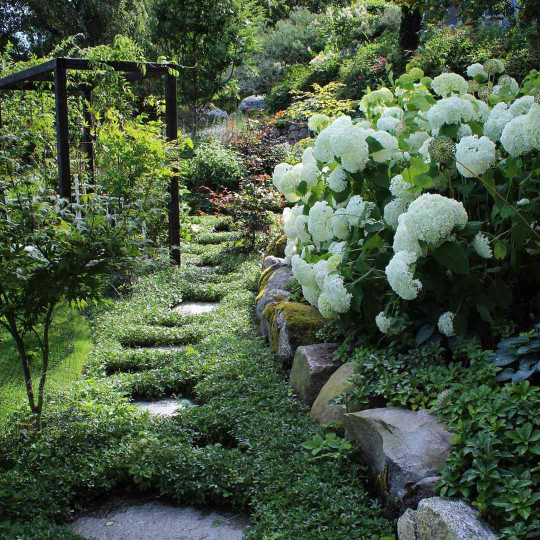 garden with thick ground cover surrounding stone pavers