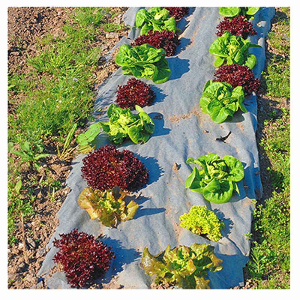 Dewitt Natural Garden Weed Barrier Biodegradable Paper M