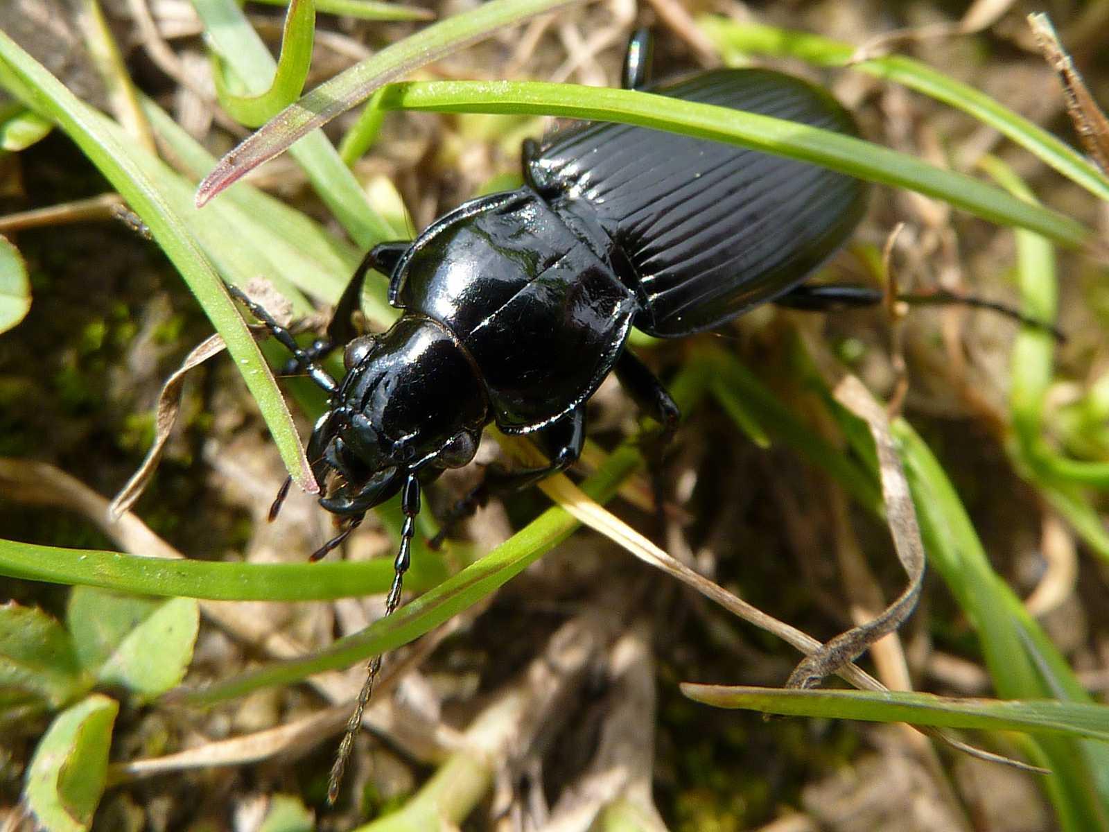 5 Good Bugs for Your Garden