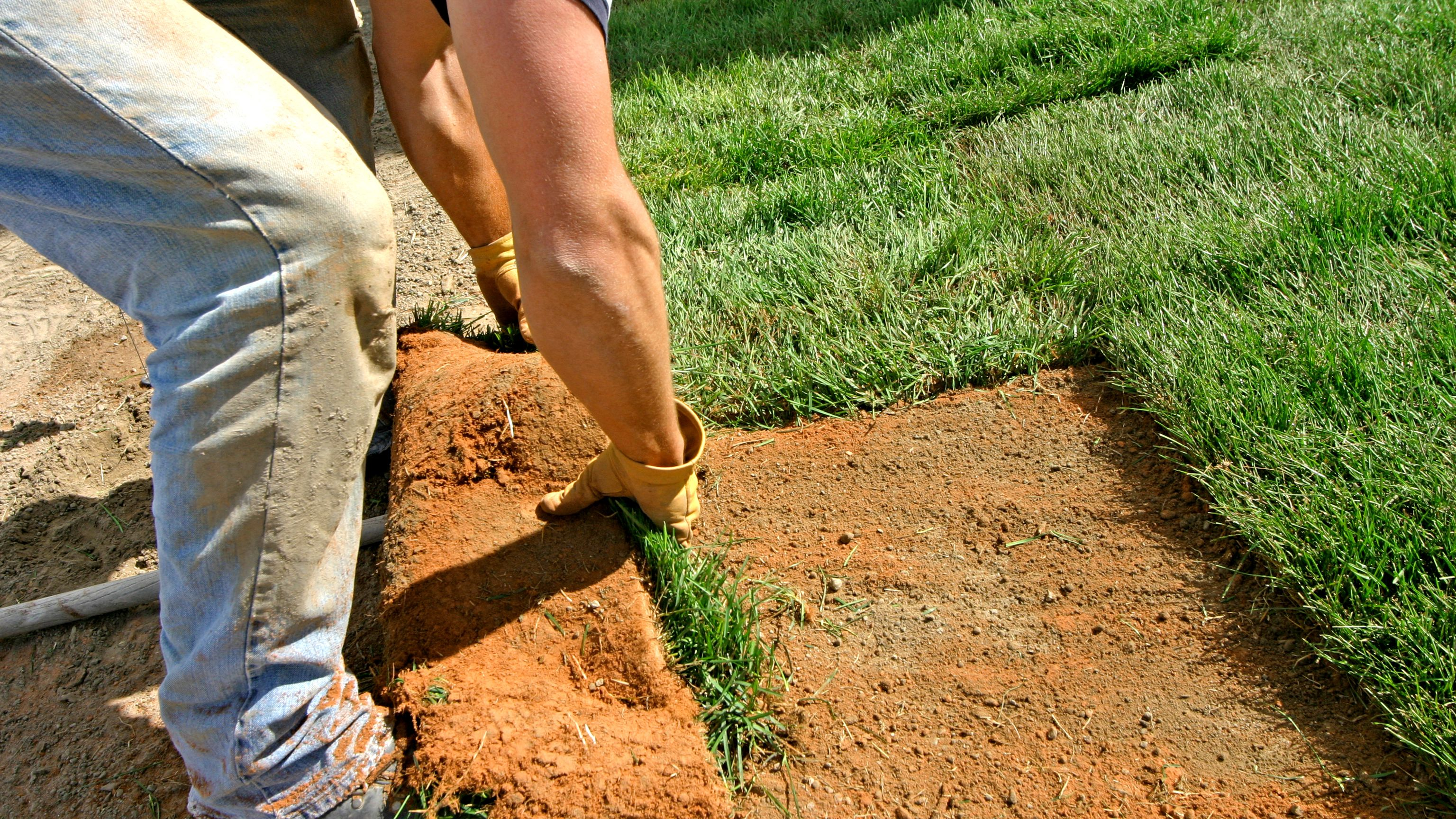 How to Lay Sod to Start a New Lawn
