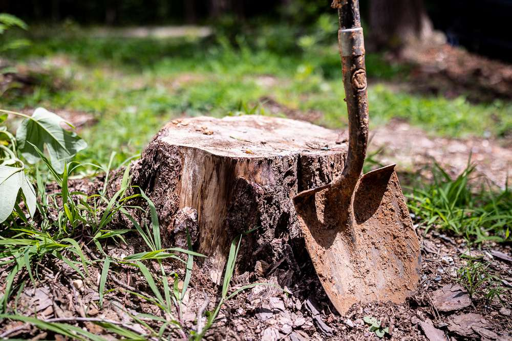 shovel next to a tree stump