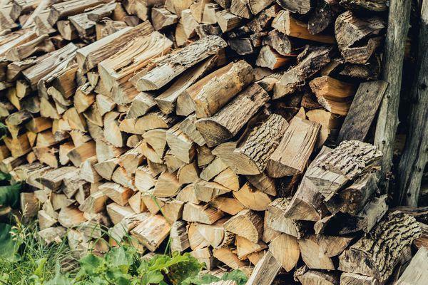 Stack of cut firewood near foliage closeup