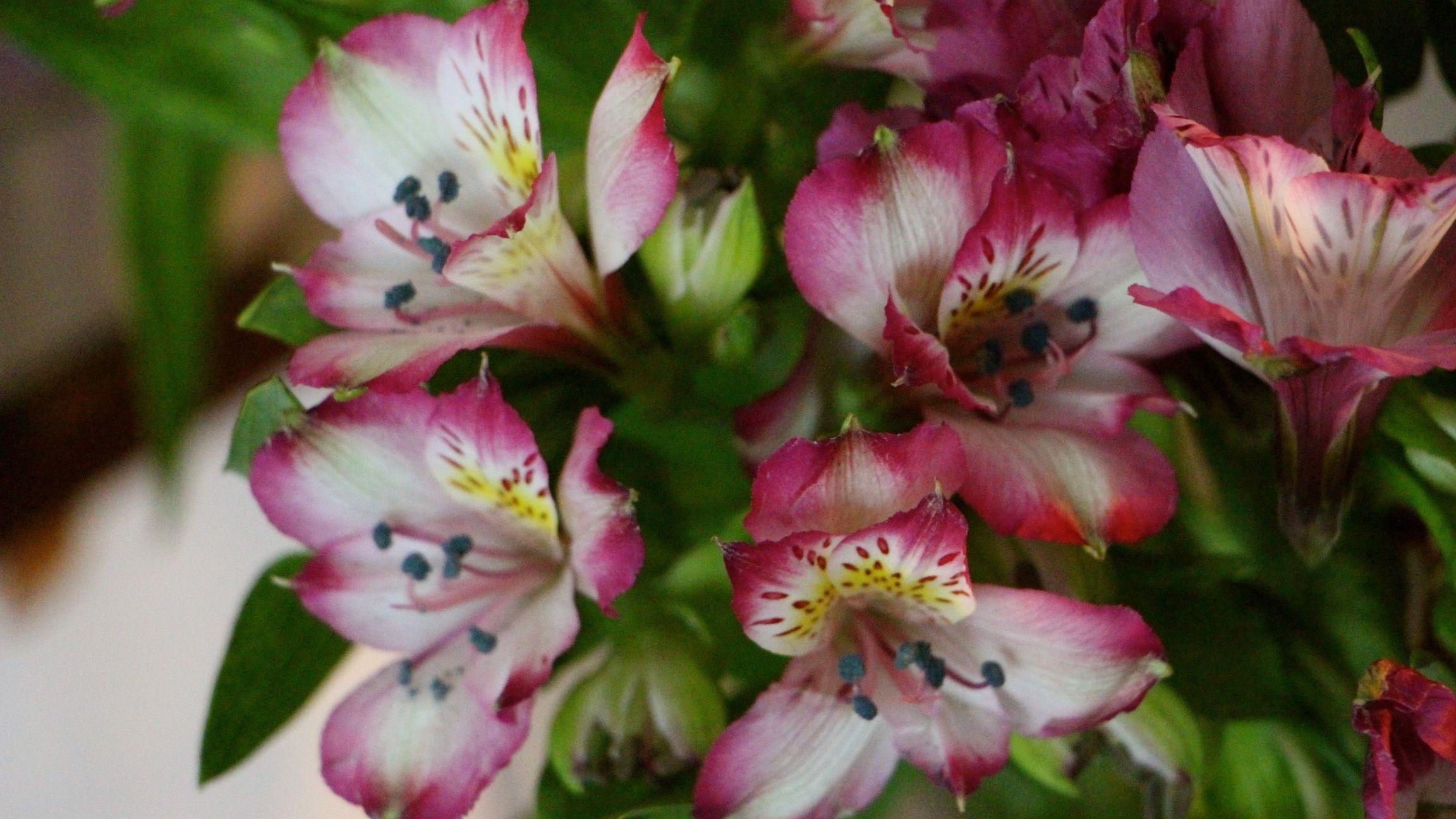 13 Best Flowers For Cut Arrangements