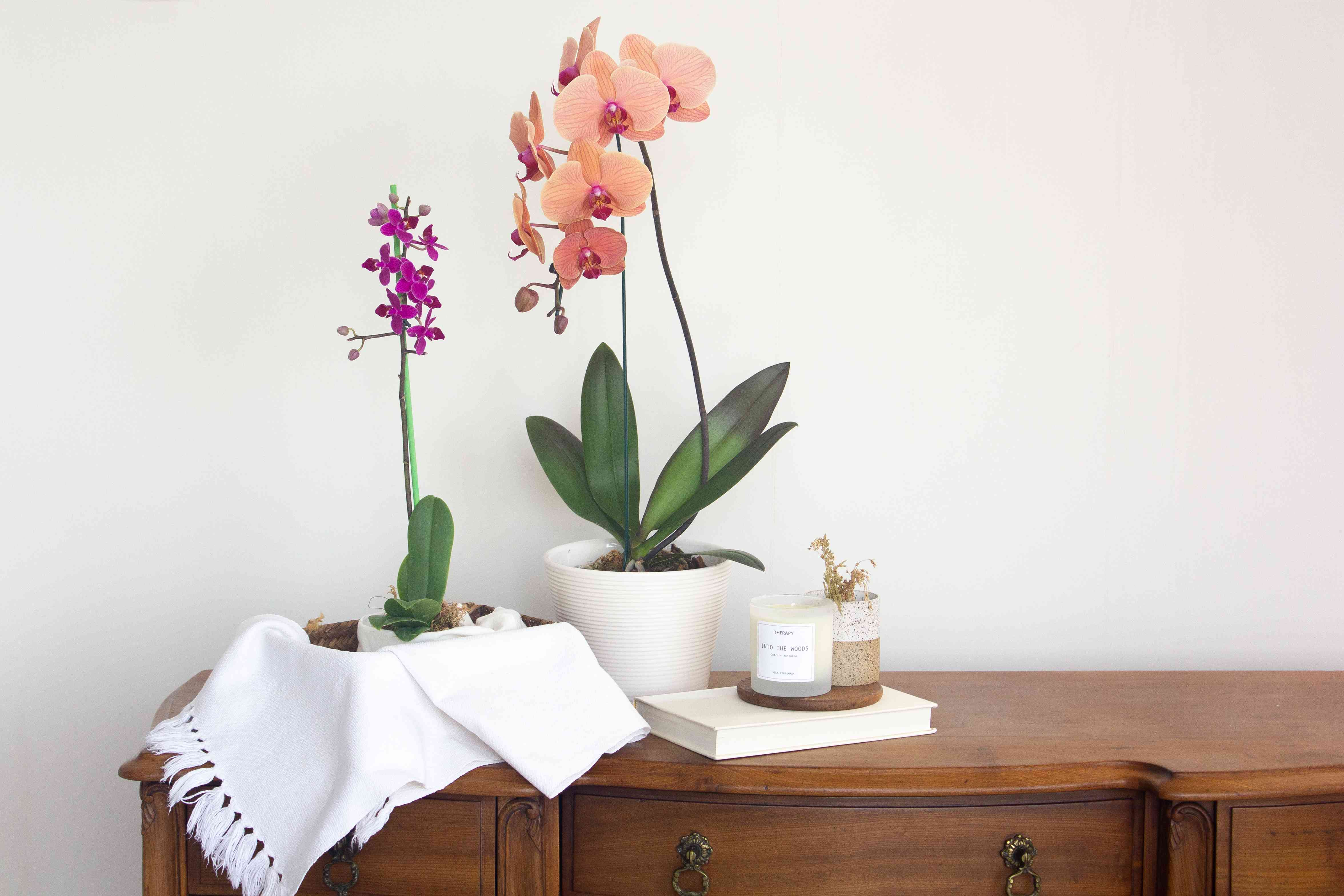 orchids in their new environment