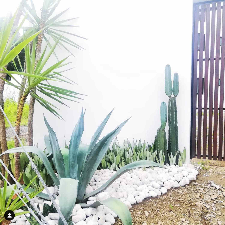 contemporary costa rica landscaping