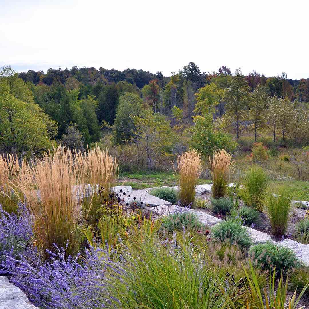 Ornamental grasses in retaining wall terraces