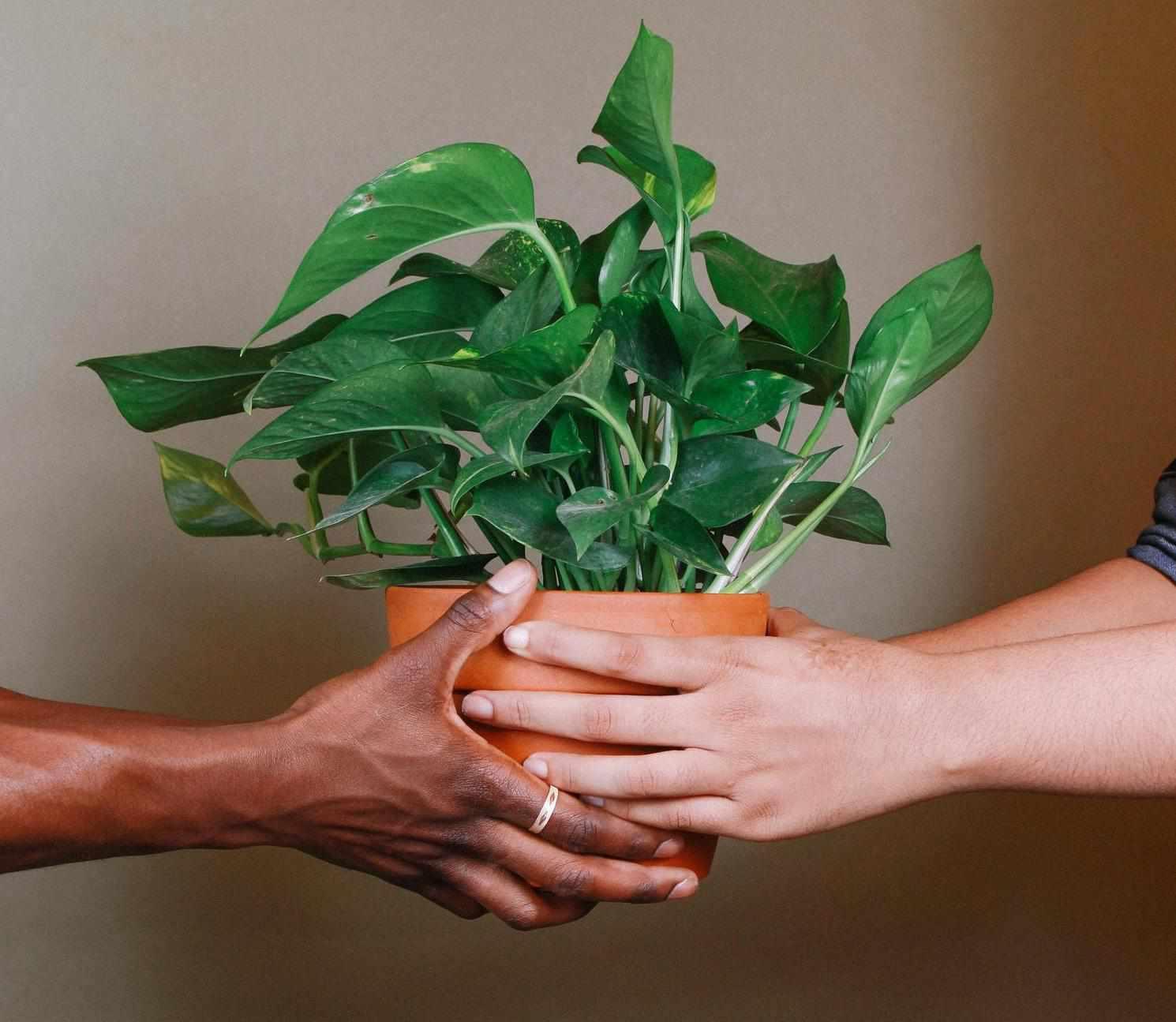 Gente sosteniendo una planta