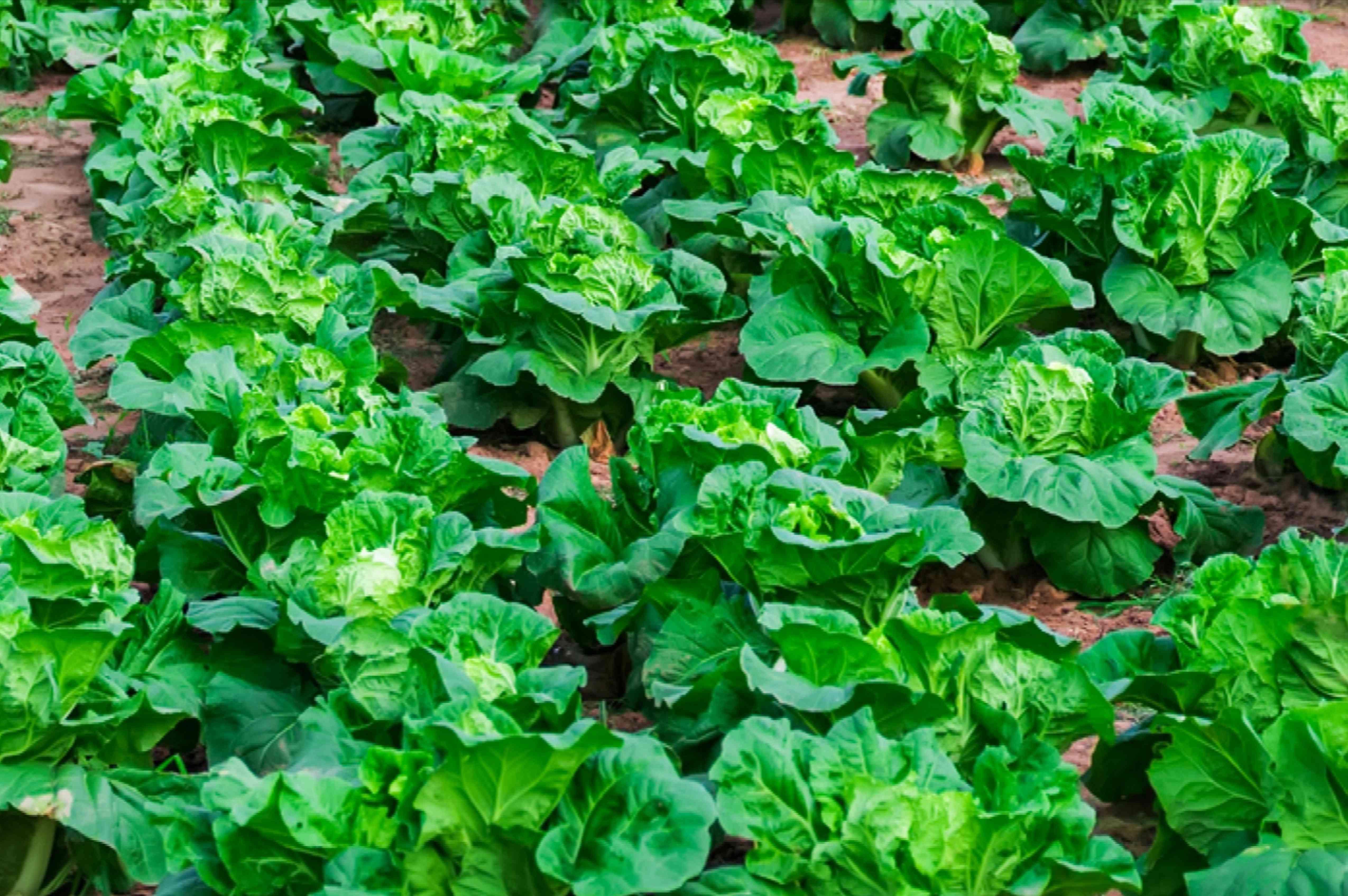choosing an already vegetative spot