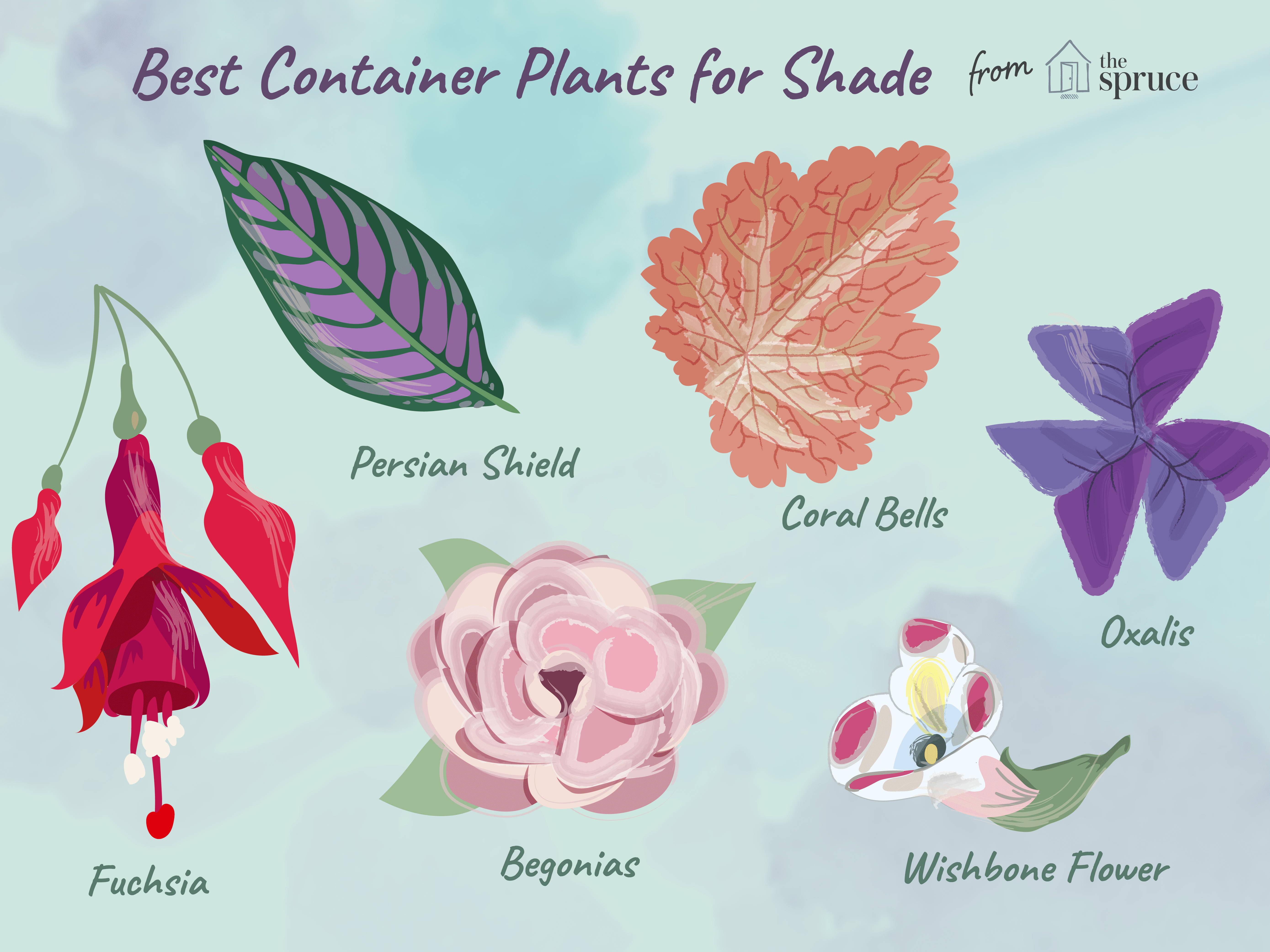 11 Great Shade Plants For Container Gardens