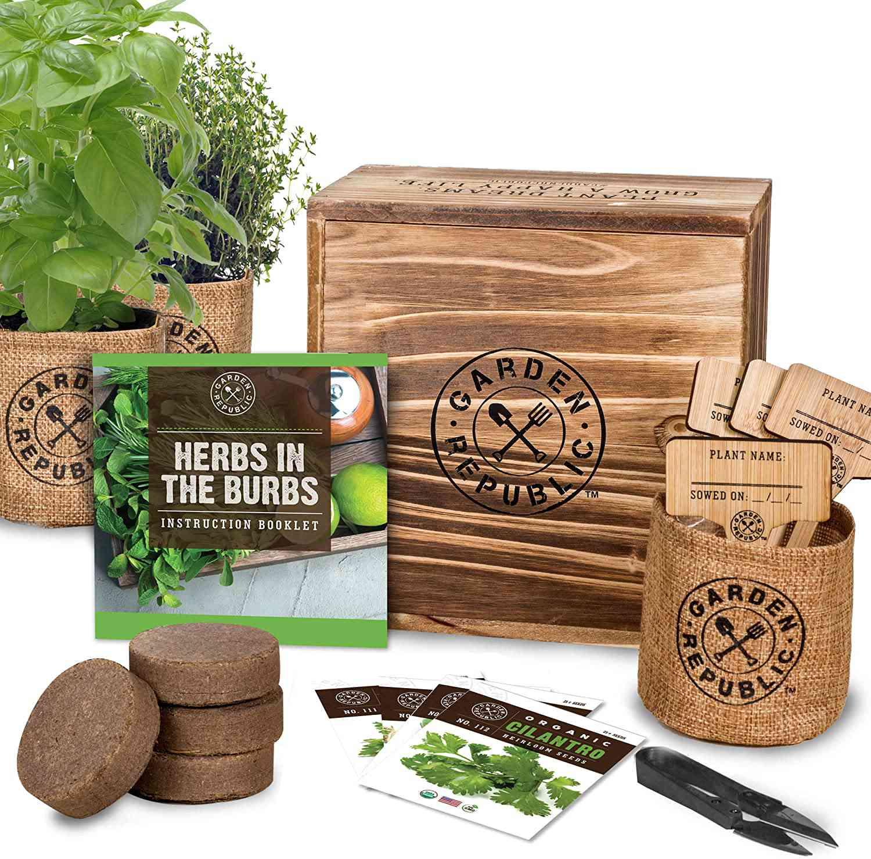 Parsley Herb Garden Grow Kit for Kids /& Adult \u2022 Herb Garden Kit \u2022 Basil Rosemary Chives