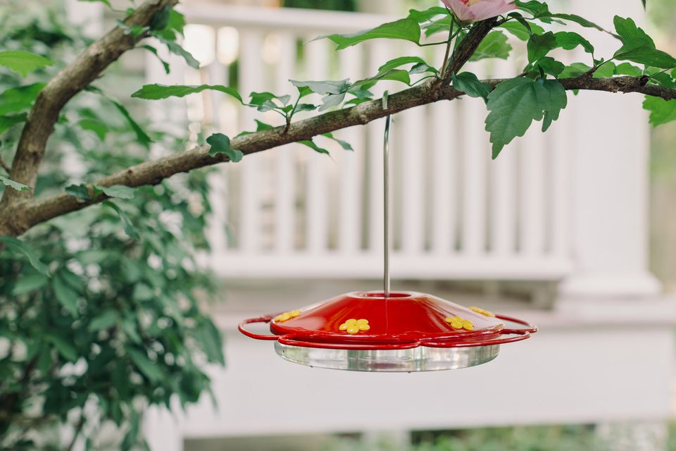 hummingbird feeder hanging in a shady area