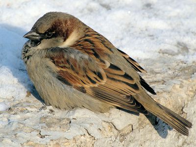 One-Legged Birds - How They Survive and How to Help