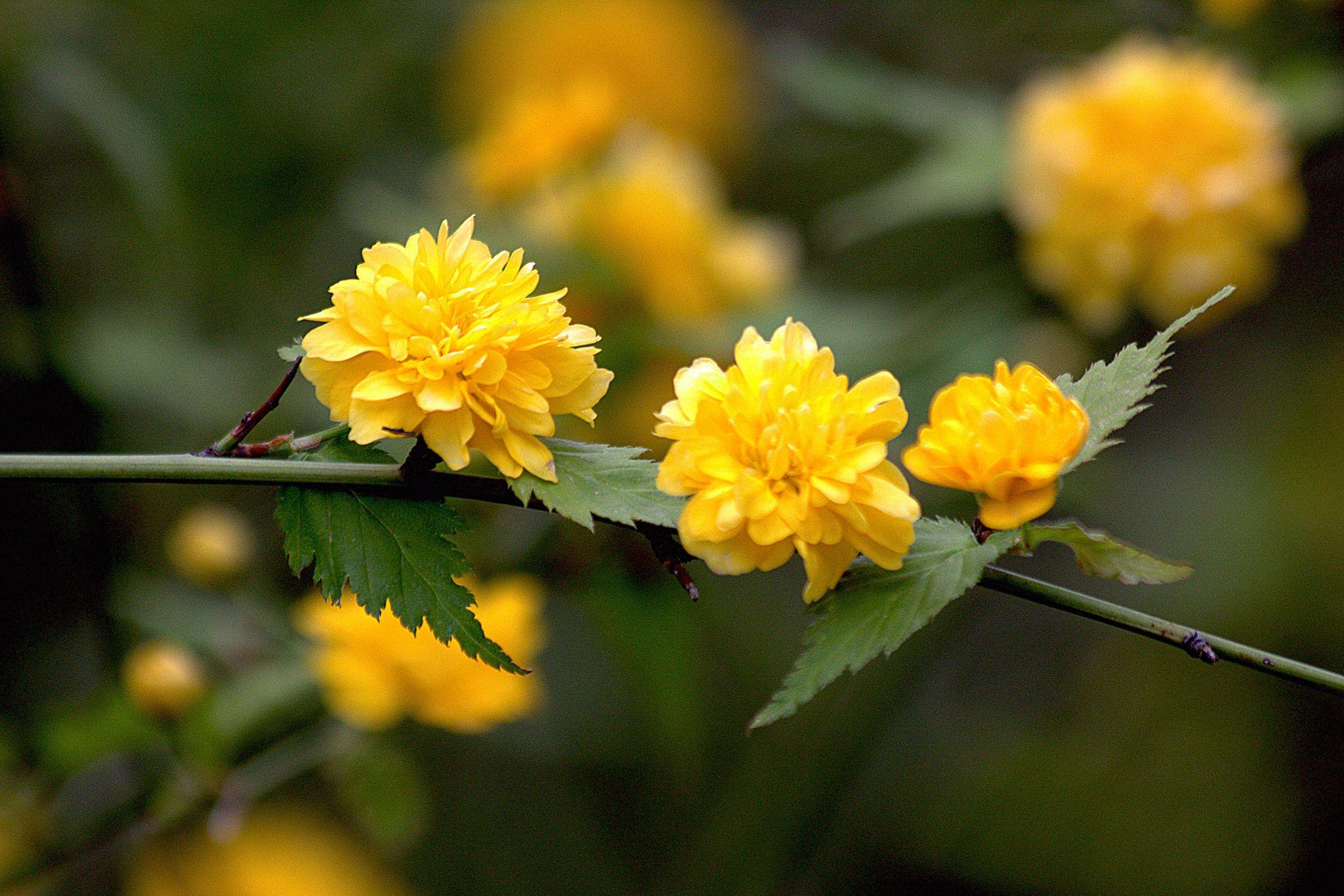 15 great flowering shrubs for your landscape izmirmasajfo