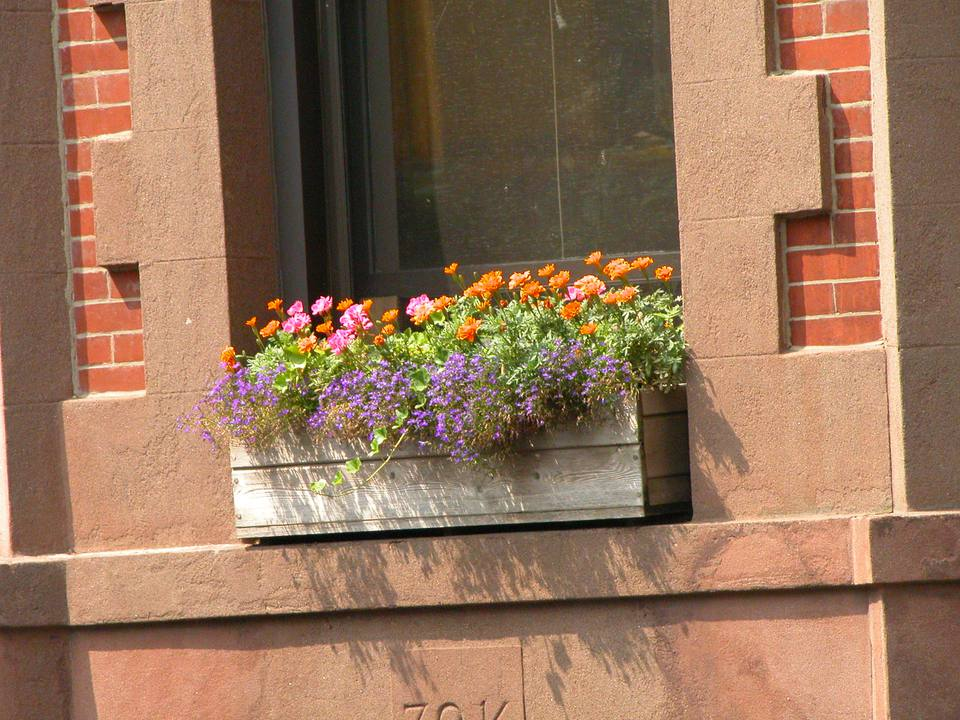 Blooming City Window Box