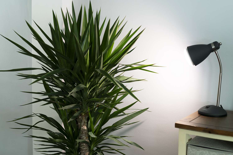 GE BR30 LED Grow Light