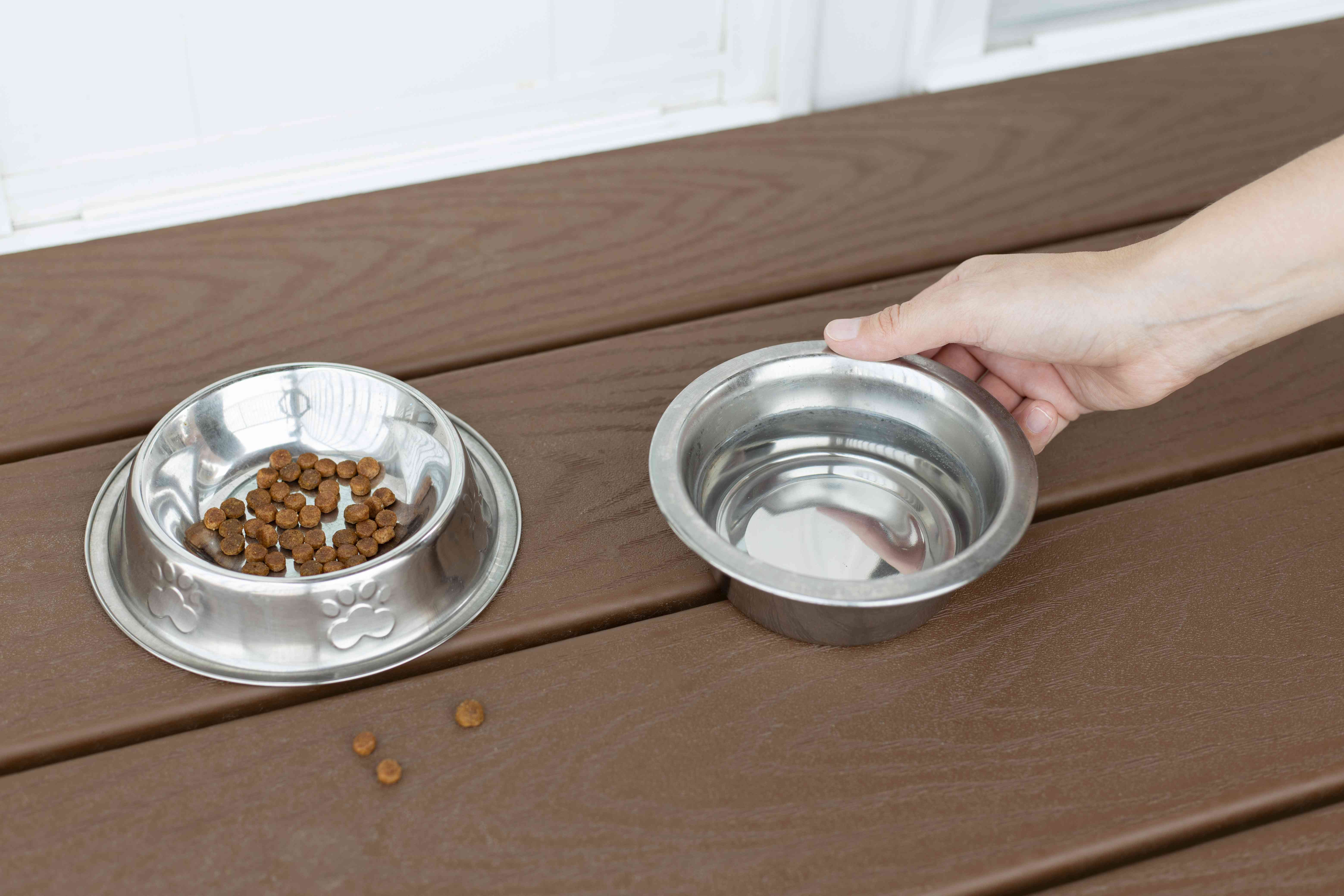 Metal pet bowls with water and food being removed to prevent ants