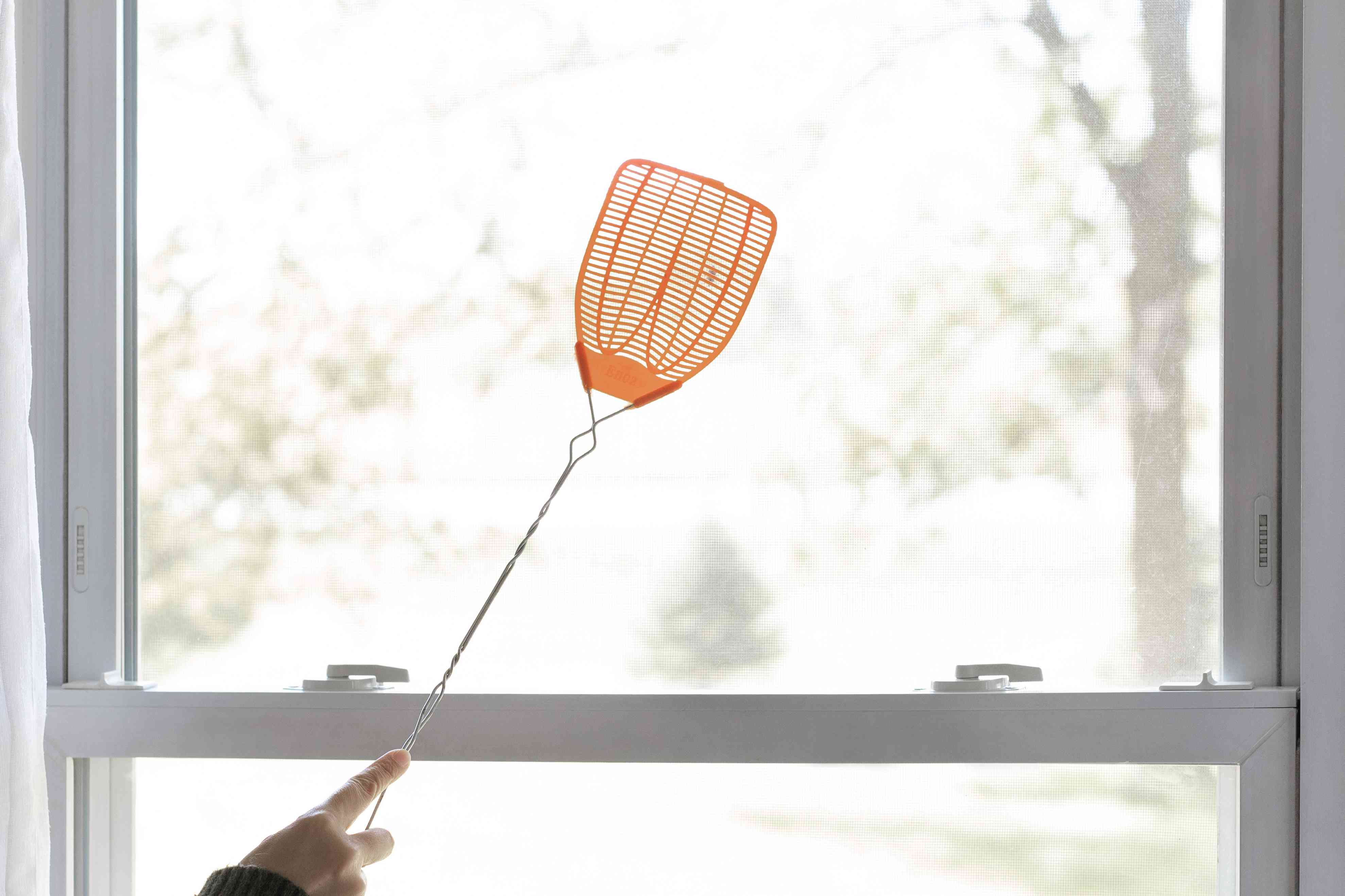 Cluster fly on window being swatted with orange swatter