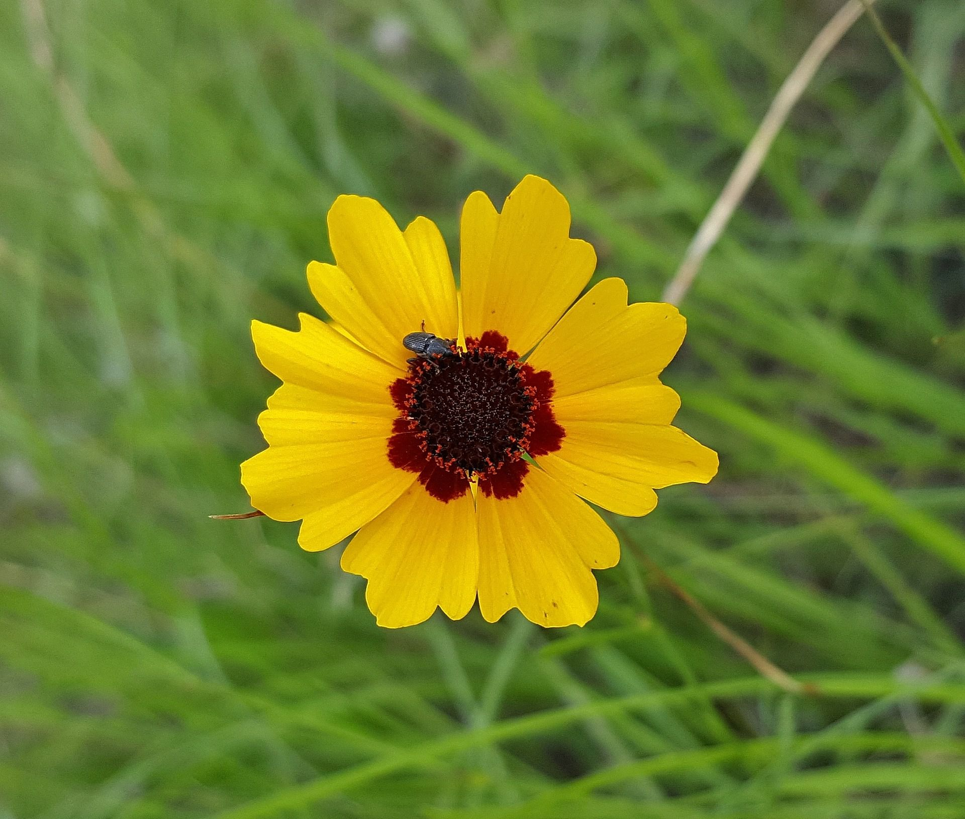 Photo Guide To Identifying Types Of Wildflowers