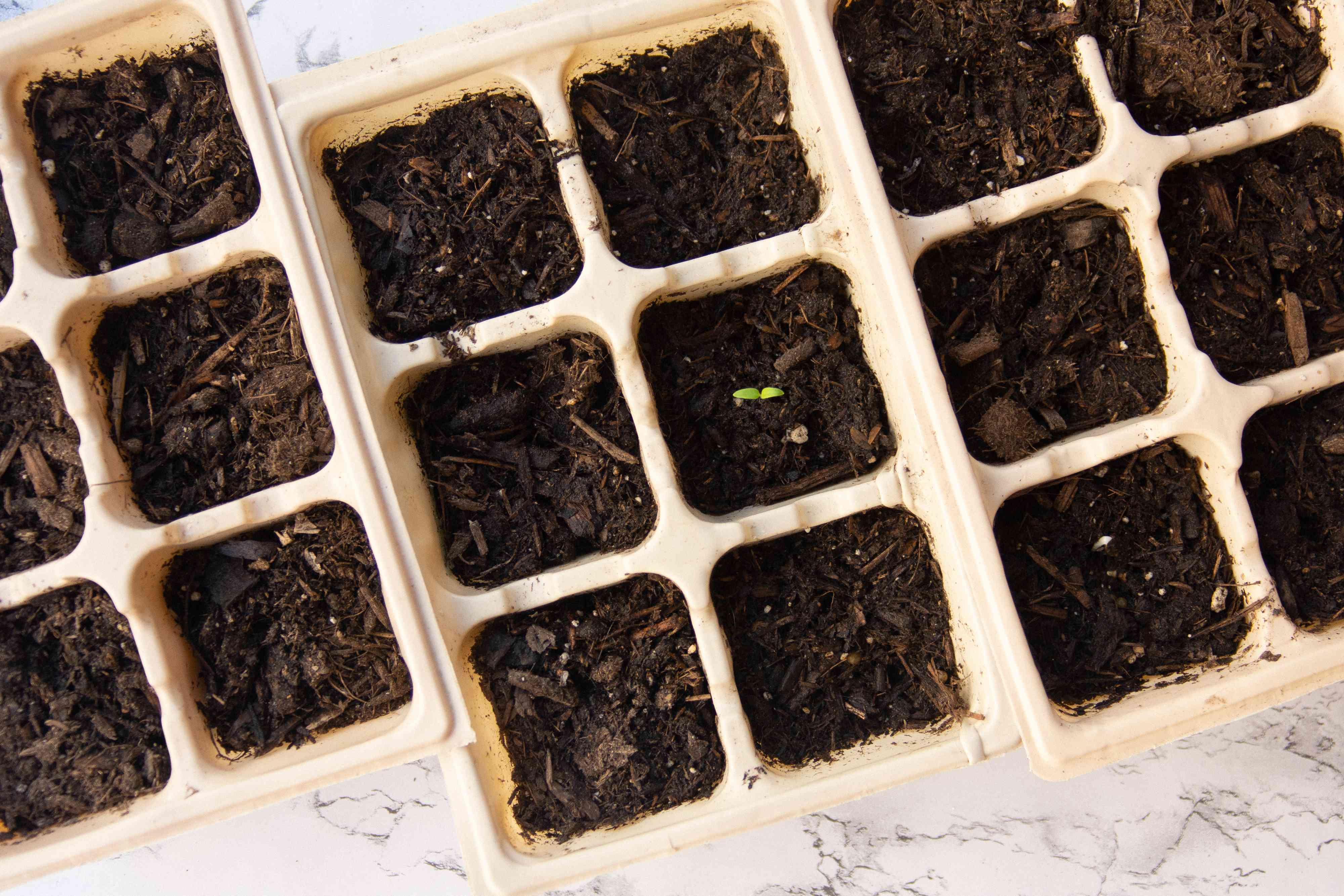 Small sprout growing from seed starting tray