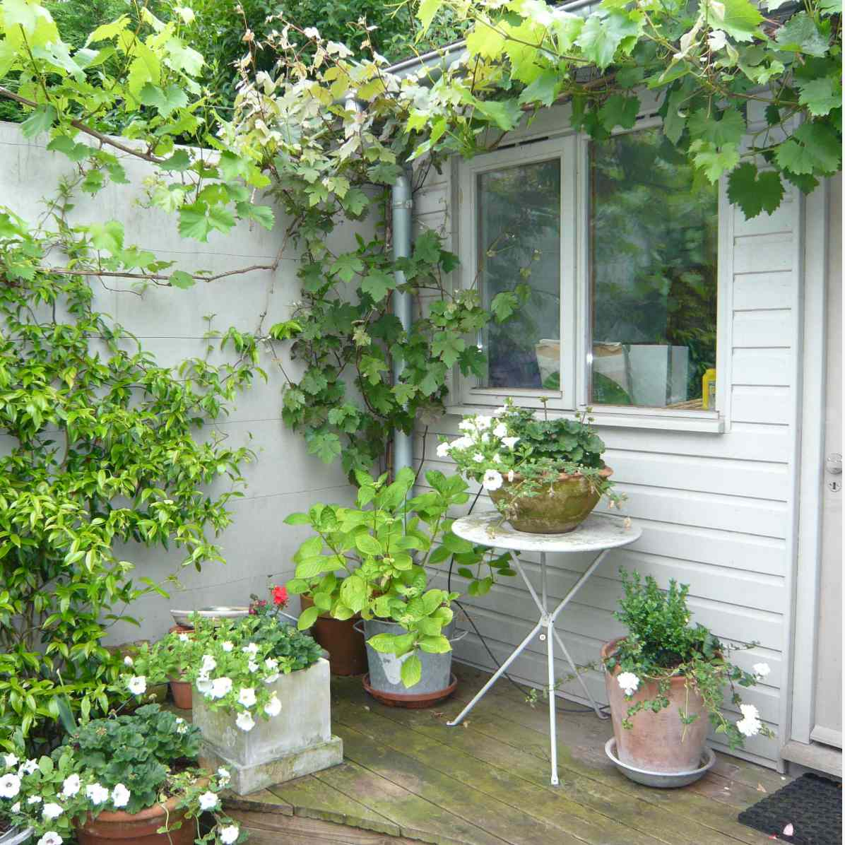 Vertical garden in courtyard with several potted plants nearby.